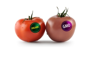 GMO-tom